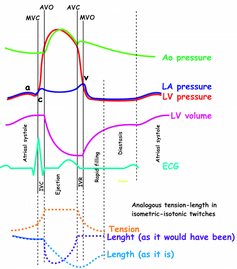 Strain rate imaging simplified pressure volume diagram wiggers diagram of a whole heart cycle the diagram shows the atrial ventricular and aortic pressure curves ccuart Gallery