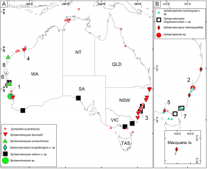 Distribution map og sphaerodorid species in Australia. From Capa & Bakken 2015.