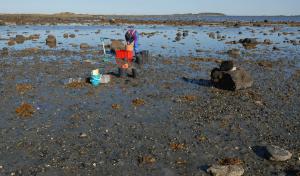Feltarbeid i fjæresonen i Grandefjæra. Grethe Sundet Haugen sikter sedimentprøver for å se på sammensetning av faunaen. Foto: Torkild Bakken, NTNU Vitenskapsmuseet. CC-BY.